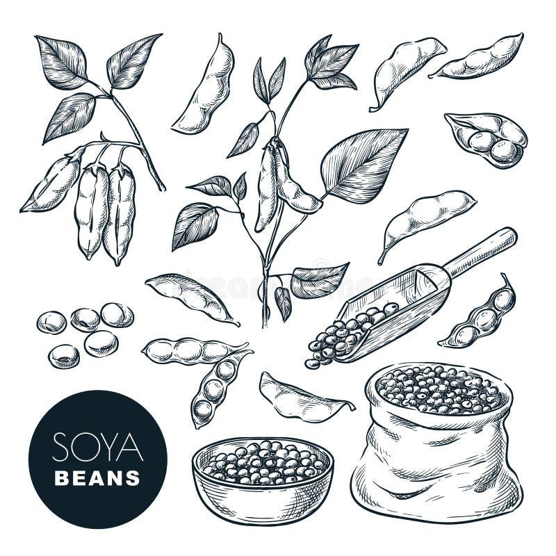 Ejemplo del vector del bosquejo de la soja Beens de la soja, vaina en la planta verde, semillas en saco Elementos aislados dibuja stock de ilustración