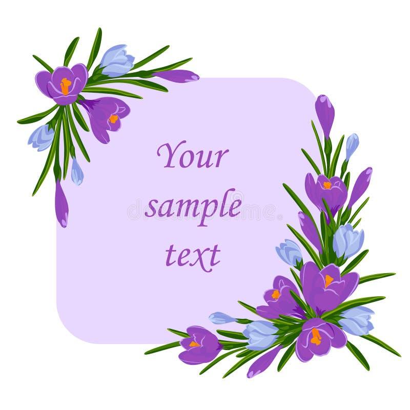 Ejemplo del vector con el ramo de azafranes violetas y azules Capítulo para el texto con la decoración de las flores del azafrán imagen de archivo