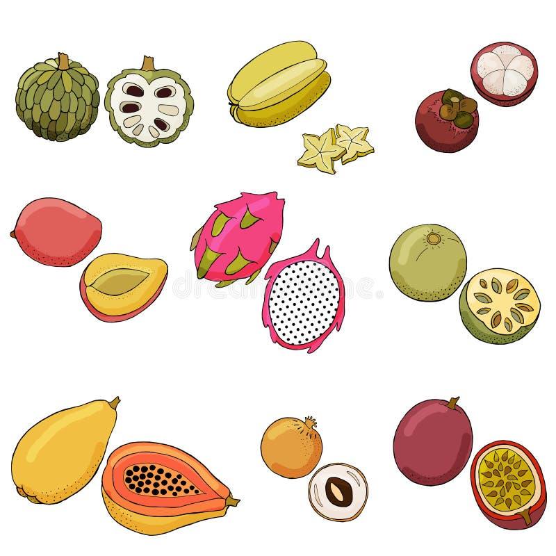Ejemplo del vector de frutas exóticas ilustración del vector