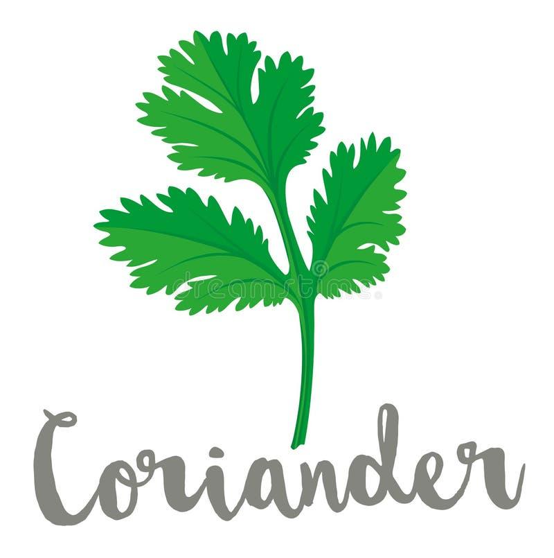 Ejemplo del vector de la hoja del coriandro o del cilantro stock de ilustración