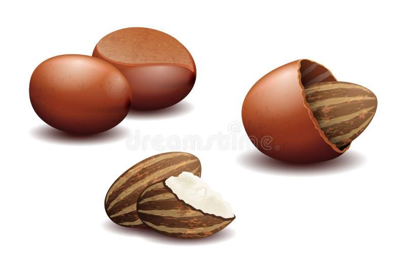 Ejemplo del vector de la mantequilla de nuez de mandingo stock de ilustración