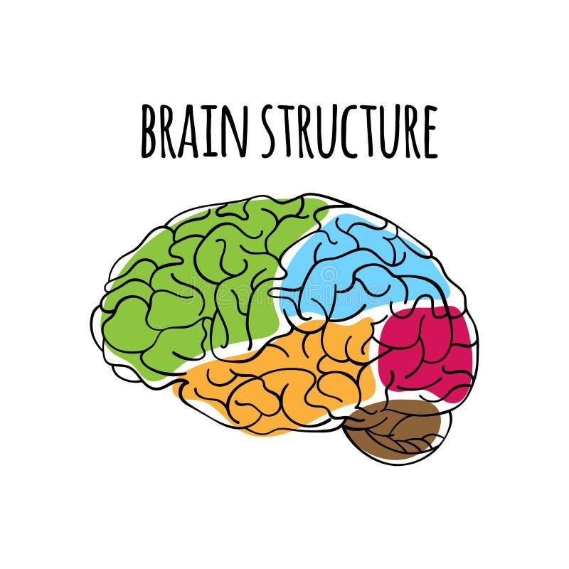 Ejemplo del vector de la medicina del sistema nervioso de la ESTRUCTURA del CEREBRO ilustración del vector