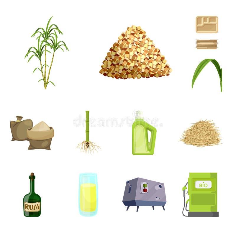 Ejemplo del vector de la muestra de la caña de azúcar y del bastón Colección de símbolo común de la caña de azúcar y del campo pa libre illustration
