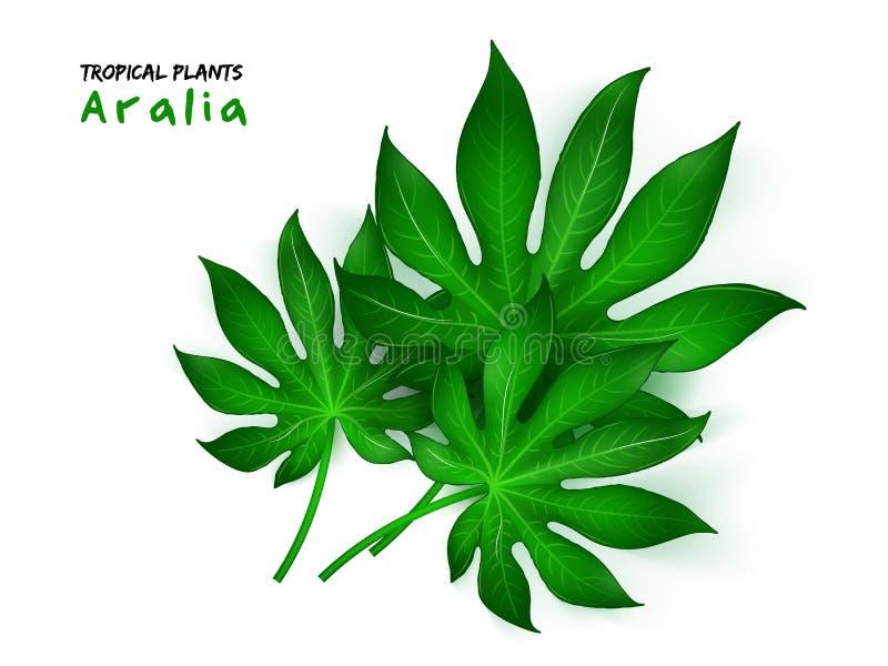 Ejemplo del vector de la planta tropical realista de la aralia libre illustration