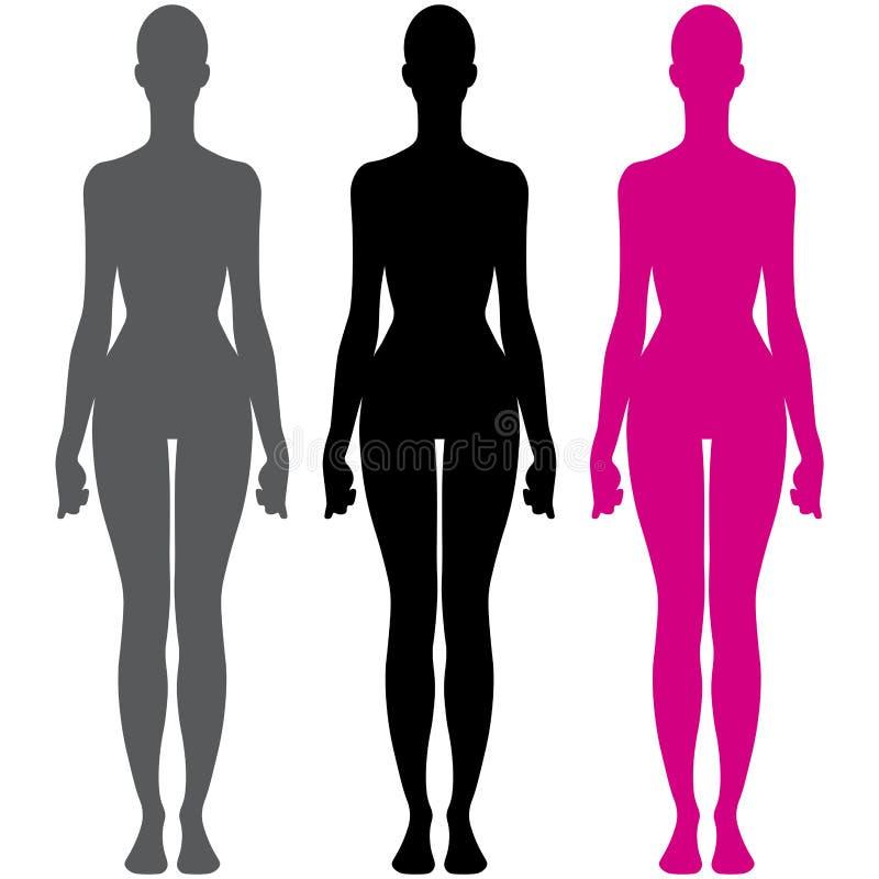 Ejemplo del vector de la silueta de la anatomía del cuerpo femenino libre illustration