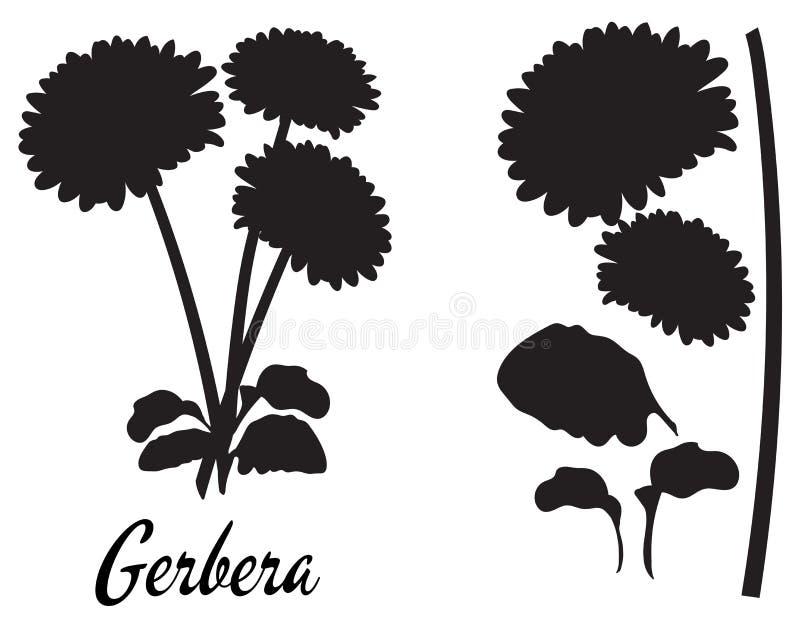 Ejemplo del vector de la silueta del Gerbera Ramo de gerberas ilustración del vector