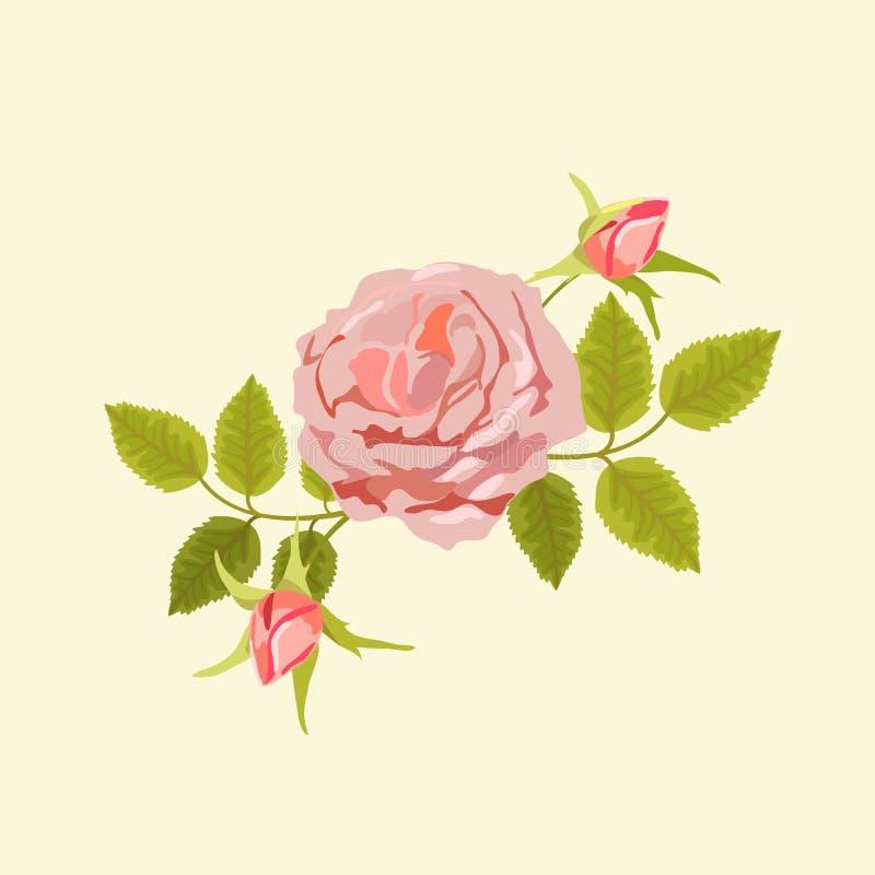 Ejemplo del vector de la té-rosa ilustración del vector