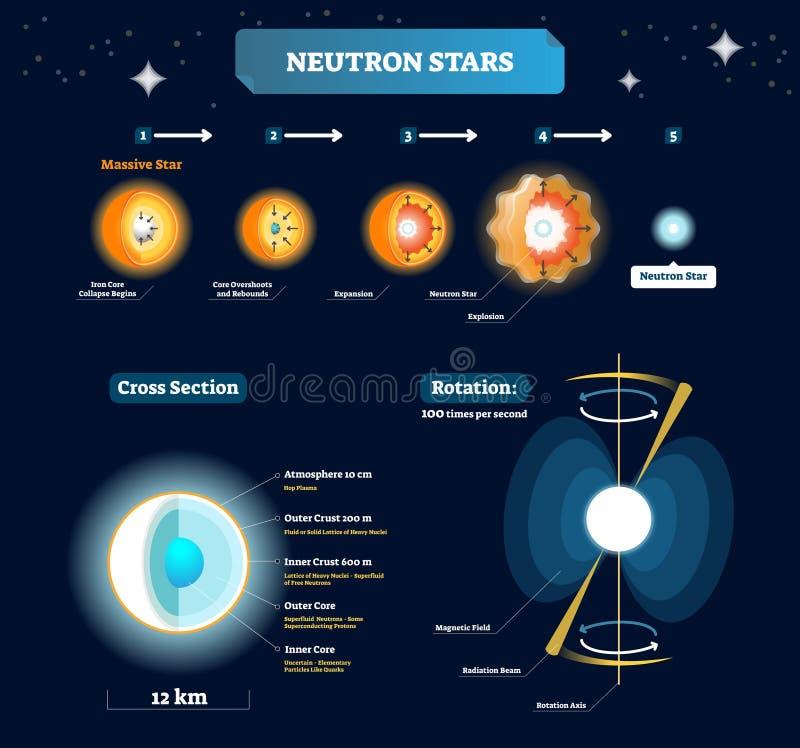 Ejemplo del vector de las estrellas de neutrón Esquema etiquetado educativo con las etapas masivas de la estrella a la explosión  stock de ilustración