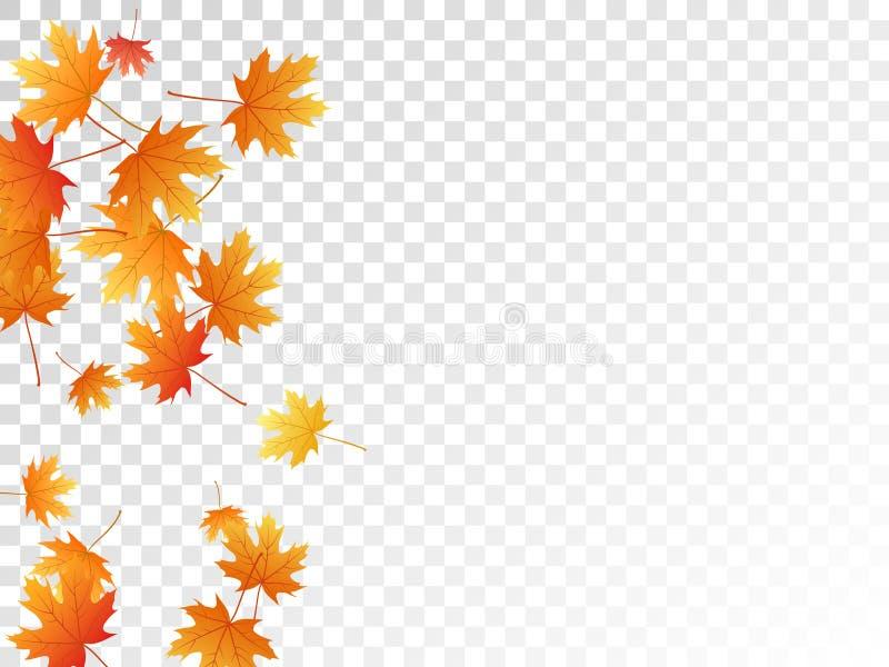 Ejemplo del vector de las hojas de arce, follaje del otoño en fondo transparente libre illustration