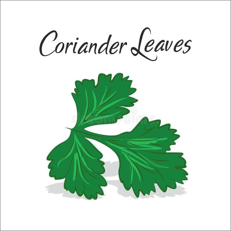 Ejemplo del vector de las hojas del coriandro libre illustration