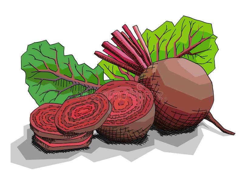 Ejemplo del vector de las remolachas rojas vegetales del dibujo libre illustration