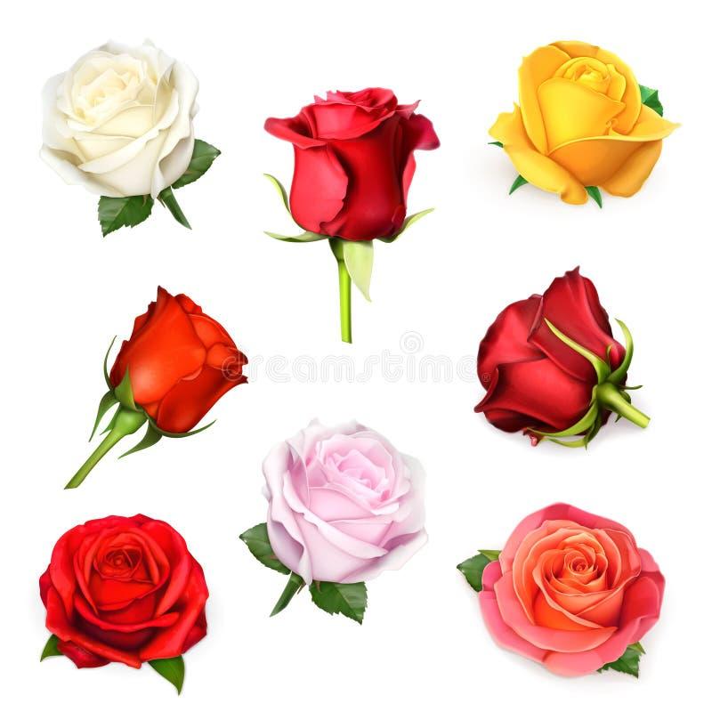 Ejemplo del vector de las rosas ilustración del vector