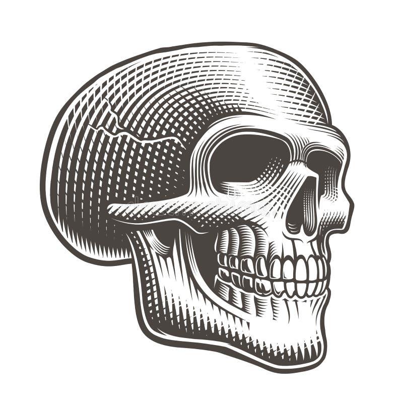 Ejemplo del vector de un perfil del cráneo en fondo ligero libre illustration