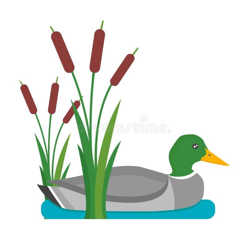 Ejemplo del vector del pato de Drake ilustración del vector