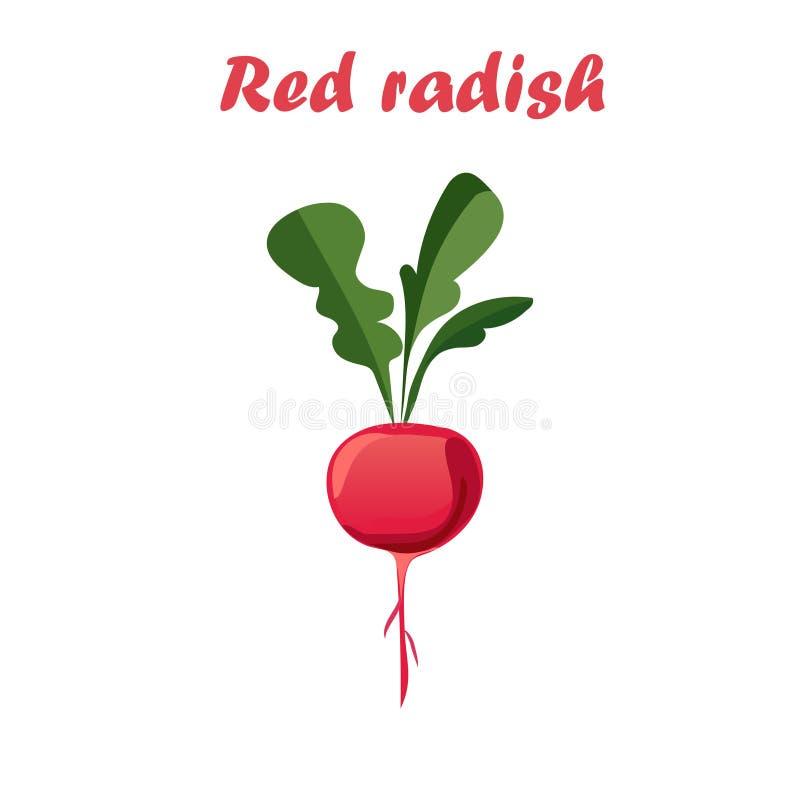 Ejemplo del vector del rábano rojo ilustración del vector