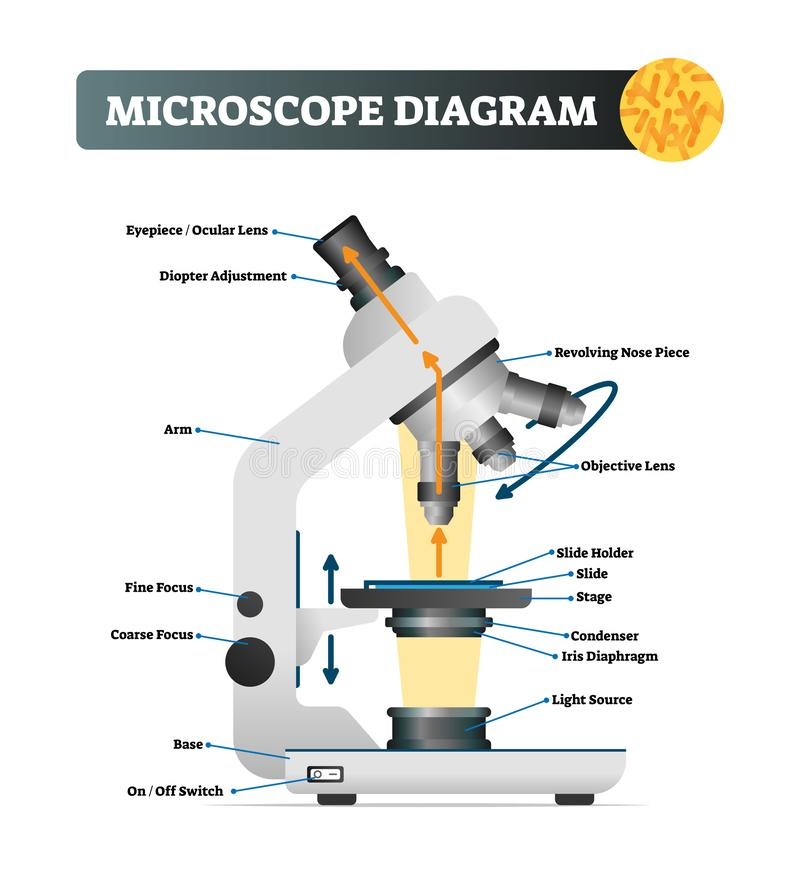 Ejemplo del vector del diagrama del microscopio Estructura etiquetada del instrumento del enfoque libre illustration