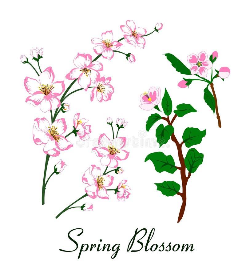 Ejemplo del vector del flor de la primavera stock de ilustración