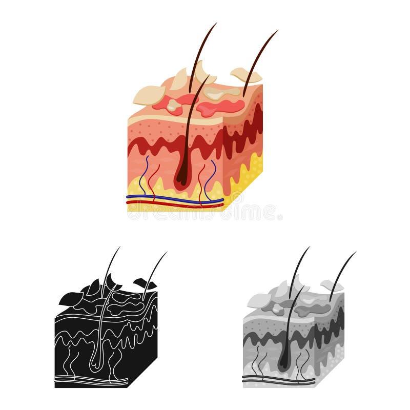 Ejemplo del vector del logotipo de la piel y de la epidermis Colección de icono del vector de la piel y del tejido para la acción ilustración del vector