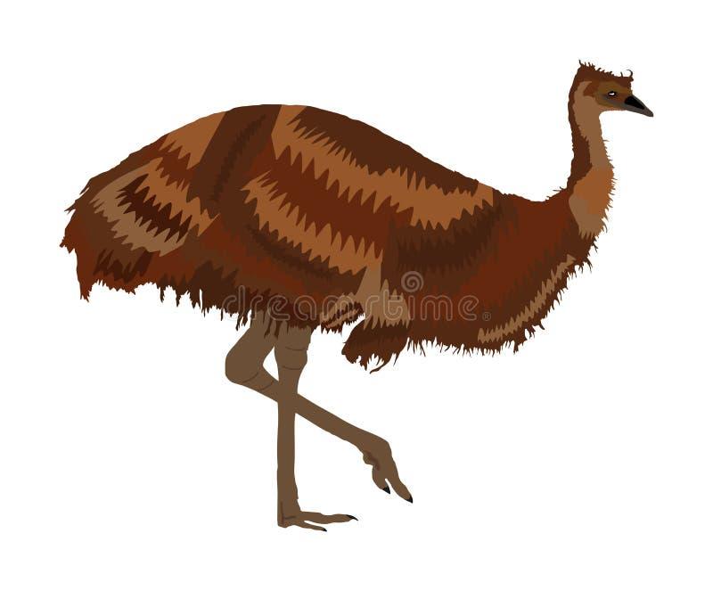 Ejemplo del vector del pájaro del emú aislado en el fondo blanco Personaje de dibujos animados animal Emú endémico australiano ilustración del vector