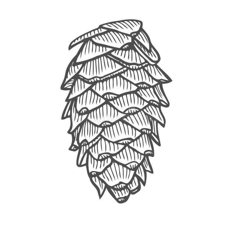 Ejemplo del vector del pinecone ilustración del vector
