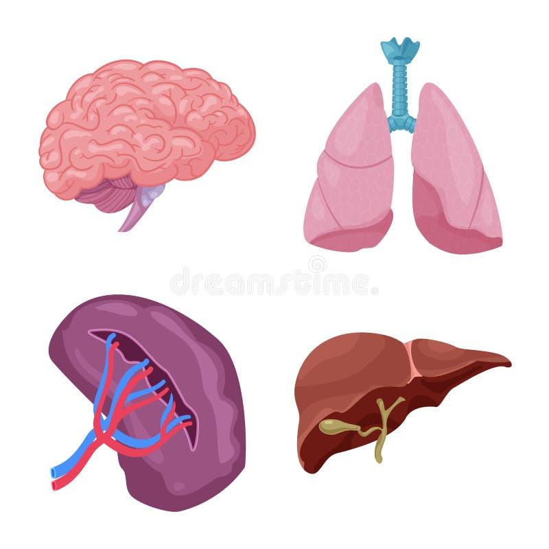 Ejemplo del vector del símbolo del cuerpo y del ser humano Colección de cuerpo y de símbolo común médico para el web libre illustration