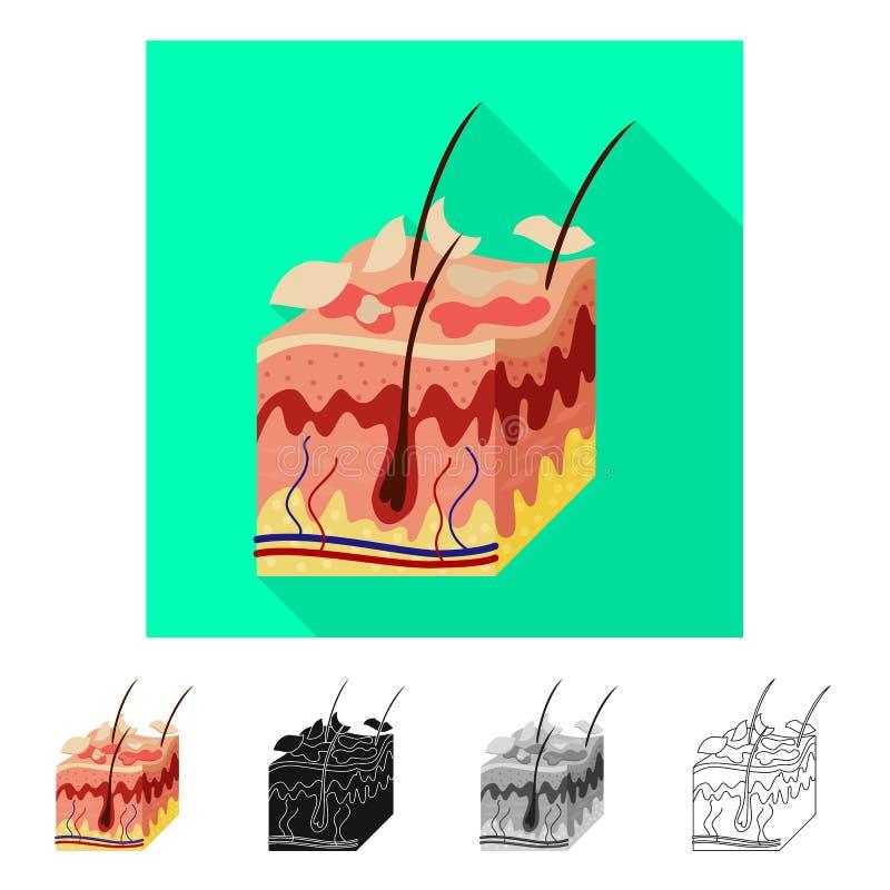 Ejemplo del vector del símbolo de la piel y de la epidermis Colección de símbolo común de la piel y del tejido para la web stock de ilustración