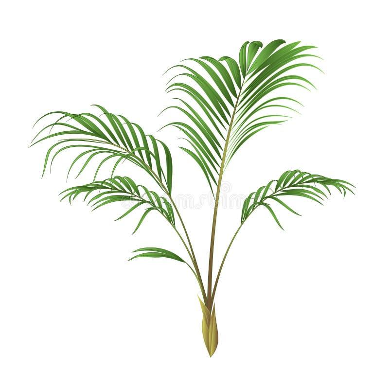 Ejemplo del vector del vintage de la planta de la casa de la decoración de la palma editable ilustración del vector