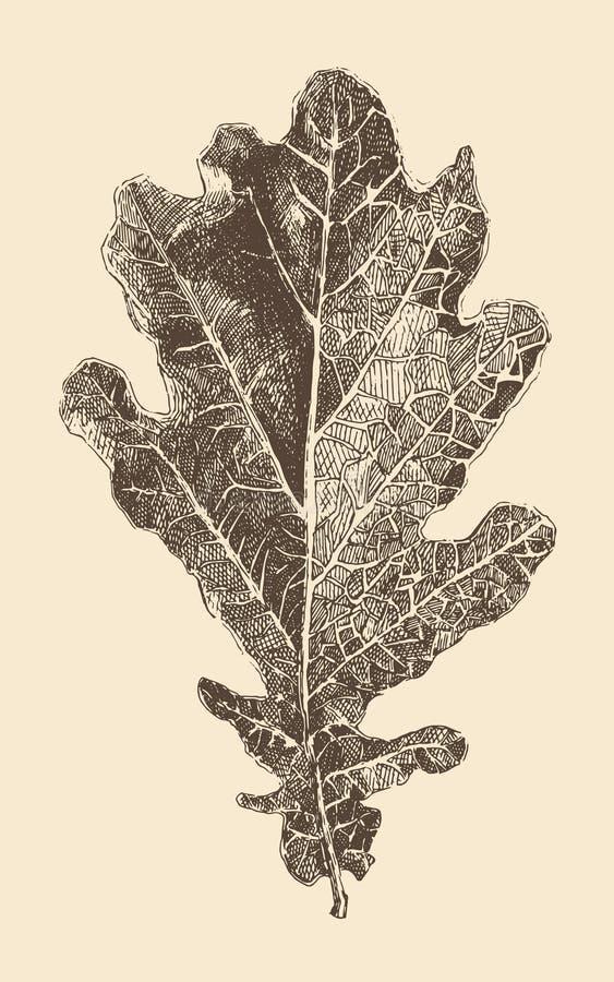 Ejemplo del vintage del estilo del grabado de la hoja del roble ilustración del vector