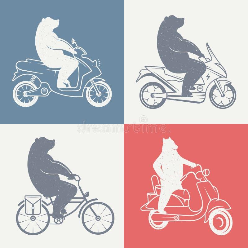 Ejemplo del vintage del oso ilustración del vector