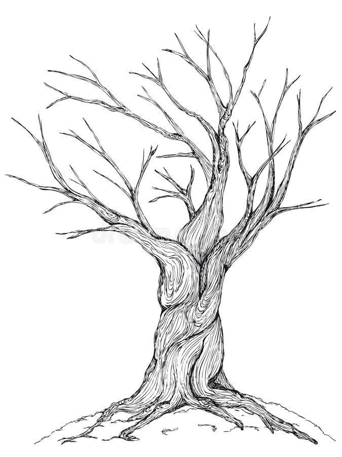 Ejemplo desnudo del árbol stock de ilustración