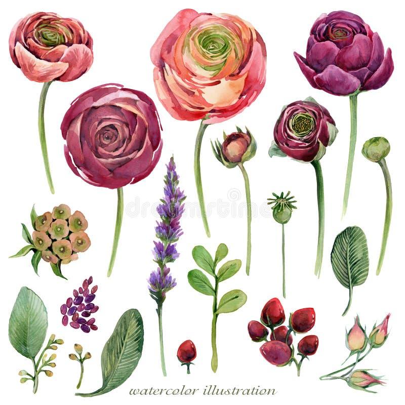 Ejemplo determinado de la flor de la acuarela libre illustration