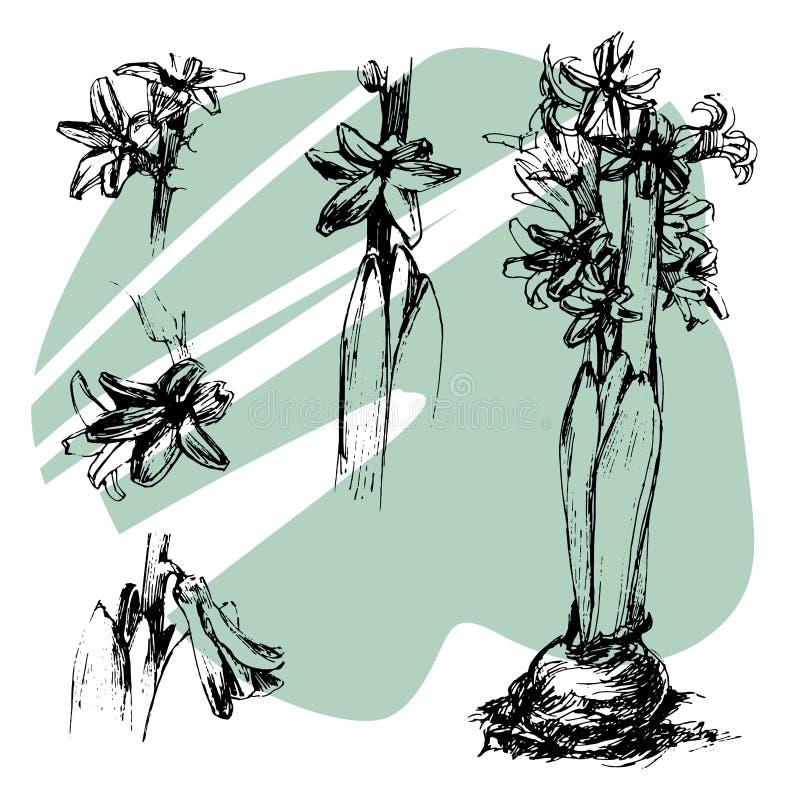Ejemplo determinado dibujado mano de la tinta del jacinto, elemento blanco y negro, floral para su diseño fotografía de archivo libre de regalías