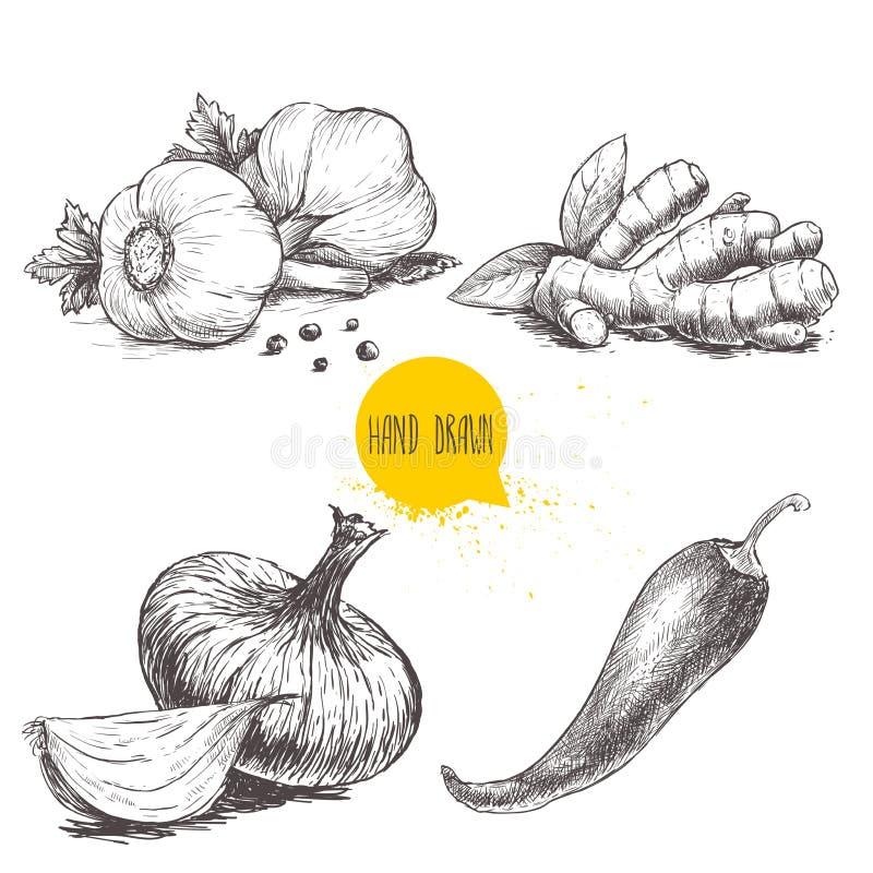 Ejemplo determinado dibujado mano del estilo del bosquejo de diversas especias Los ajos con pimientas negras, la raíz del jengibr libre illustration