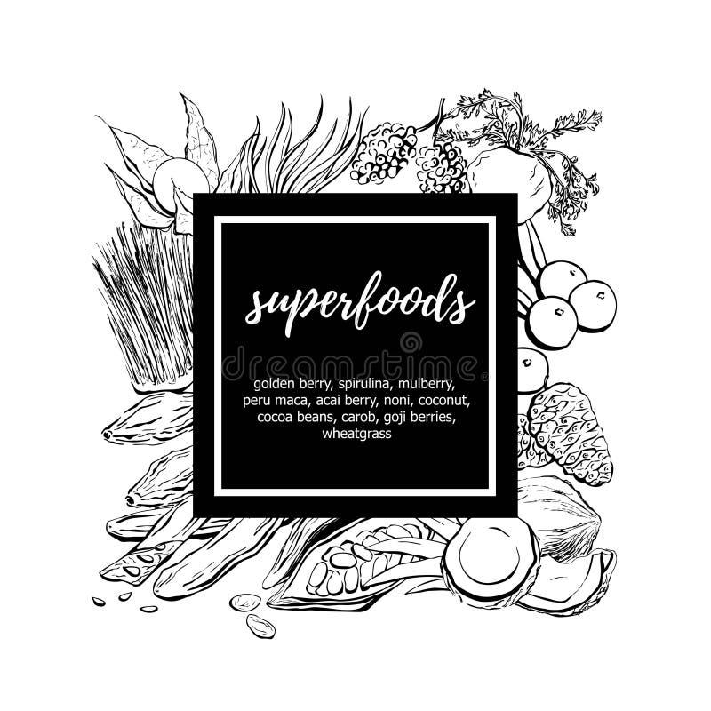 Ejemplo dibujado mano de la comida del vector con los superfoods libre illustration