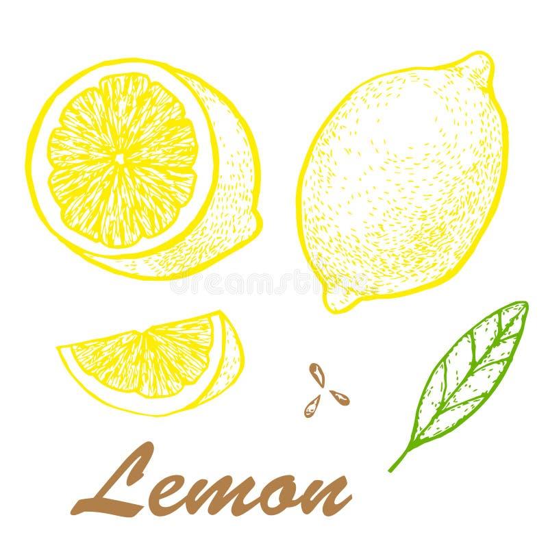 Ejemplo dibujado mano del lim?n Dibujo detallado de la fruta c?trica ejemplo con la fruta del bosquejo fotos de archivo libres de regalías