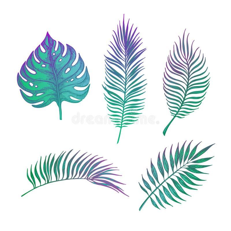 Ejemplo dibujado mano del vector - hojas de palma stock de ilustración