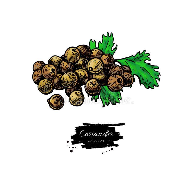 Ejemplo dibujado mano del vector del mont?n de la semilla de coriandro Objeto aislado de la especia stock de ilustración