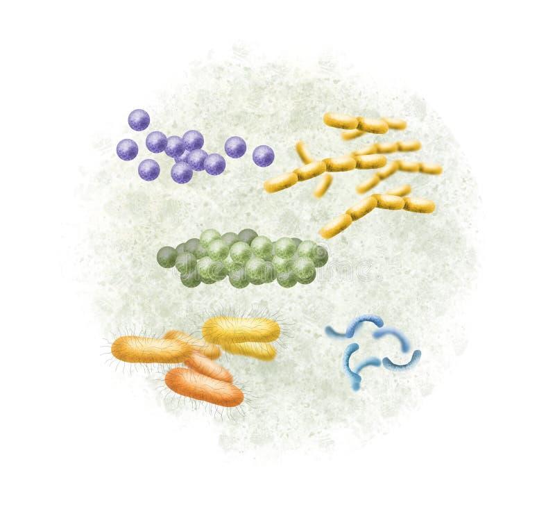 Ejemplo digital de las bacterias libre illustration