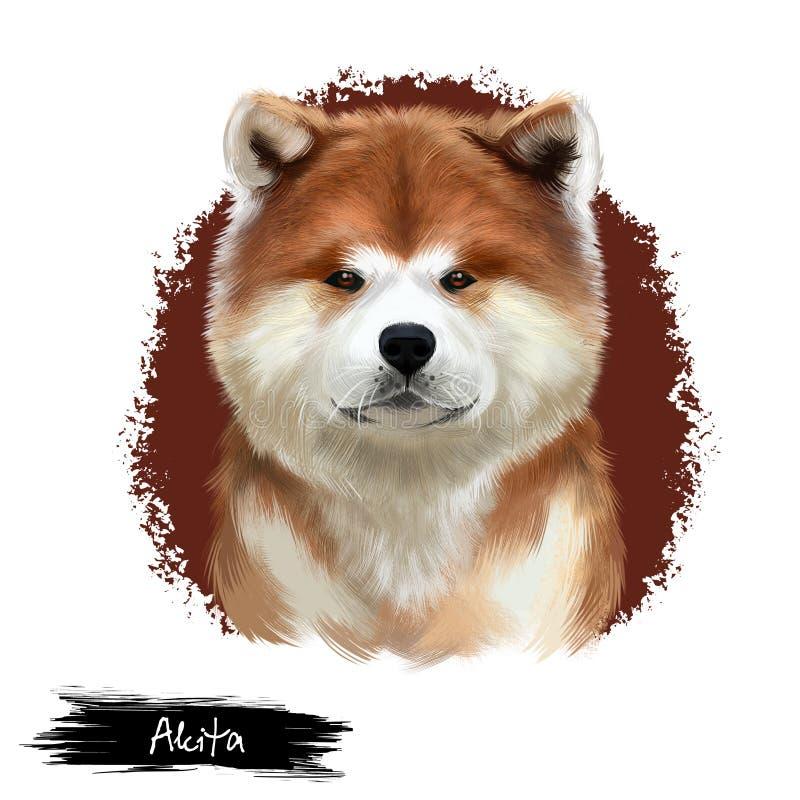 Ejemplo digital del arte de la raza de Akita aislado en blanco Animal criado en línea pura nacional lindo Raza grande del america ilustración del vector
