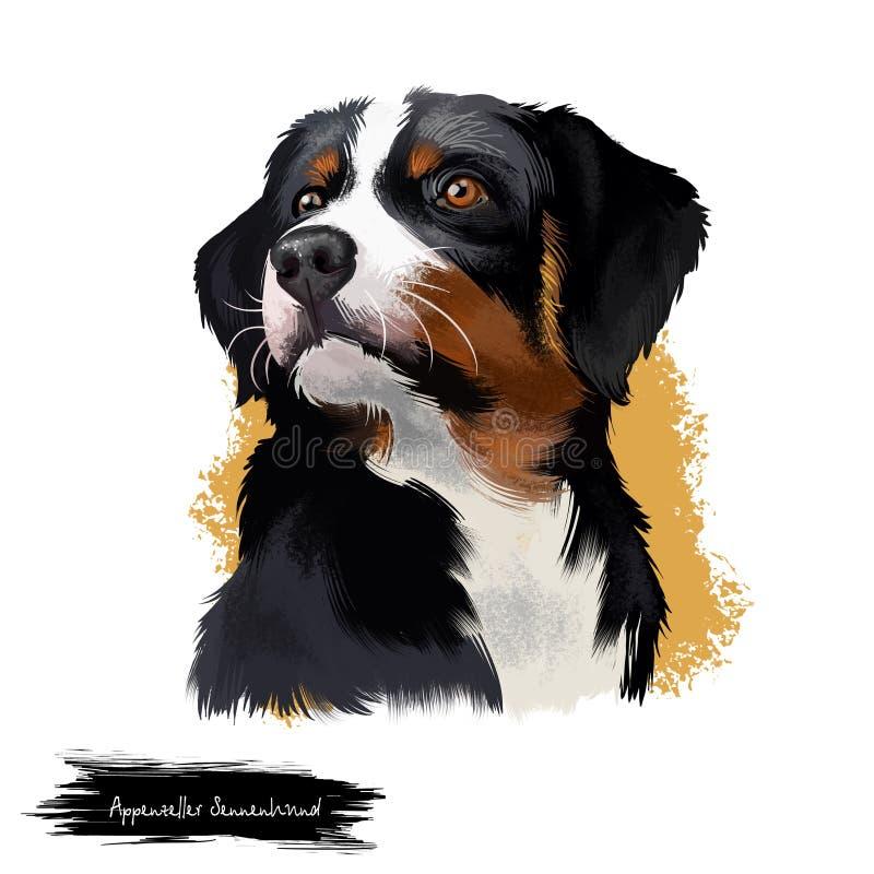 Ejemplo digital del arte del perro de Appenzeller Sennenhund aislado en blanco Razas regionales de la raza de tamaño mediano de S ilustración del vector