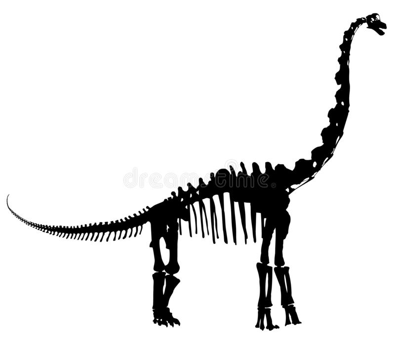 Ejemplo esquelético del vector del Brontosaurus libre illustration
