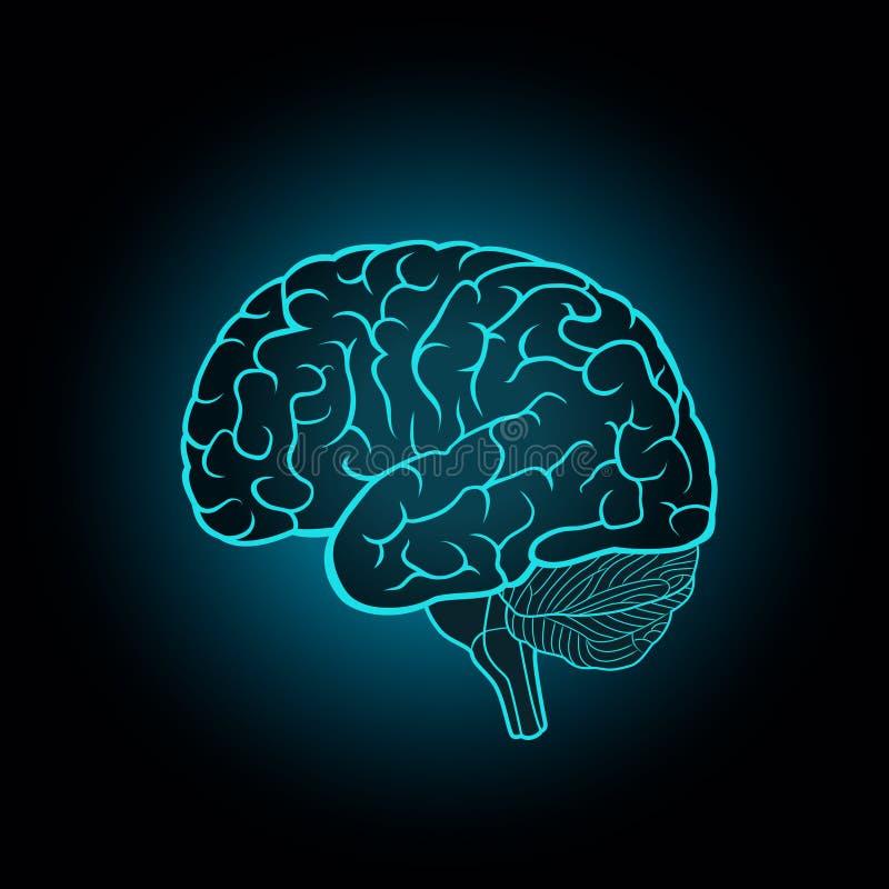 Ejemplo esquemático del cerebro humano en un fondo azul marino ilustración del vector