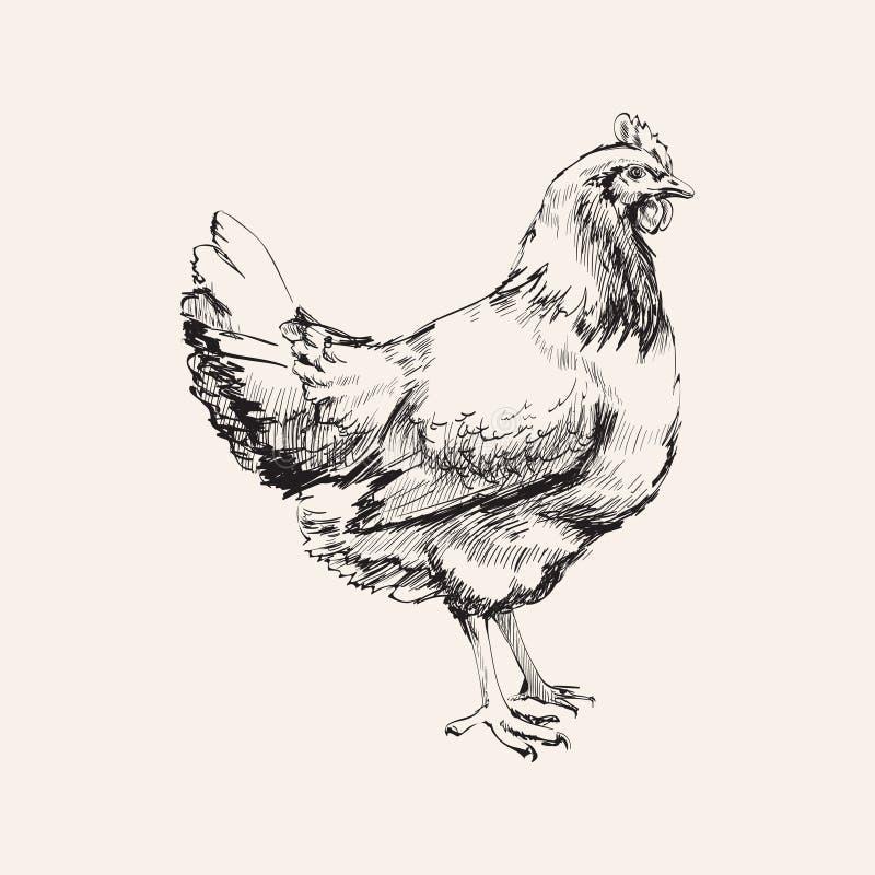 Ejemplo exhausto de Hen Vector del pollo del bosquejo de la mano stock de ilustración