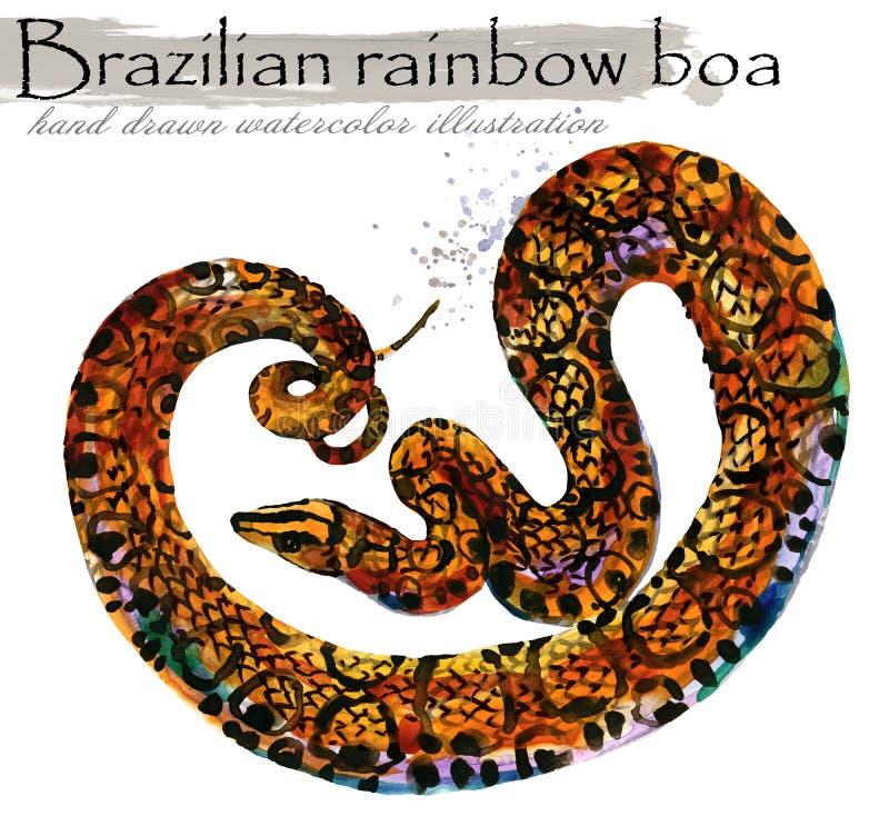 Ejemplo exhausto de la acuarela de la mano de la serpiente Madera áspera Virer foto de archivo libre de regalías