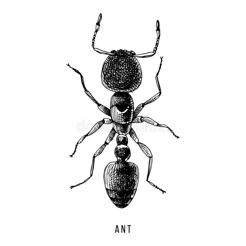 Ejemplo exhausto de la hormiga de la mano stock de ilustración
