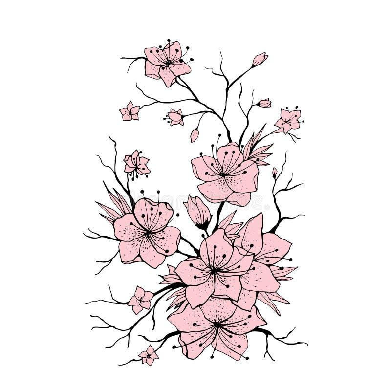 Ejemplo exhausto de la mano de la rama de Sakura stock de ilustración