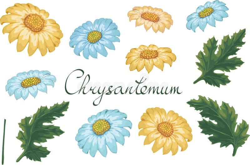 Ejemplo floral del vector con el crisantemo Elementos aislados en un fondo blanco De oro-margarita amarilla y azul para su libre illustration