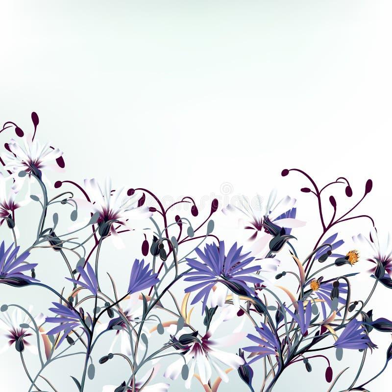 Ejemplo floral del vector con las flores del campo stock de ilustración