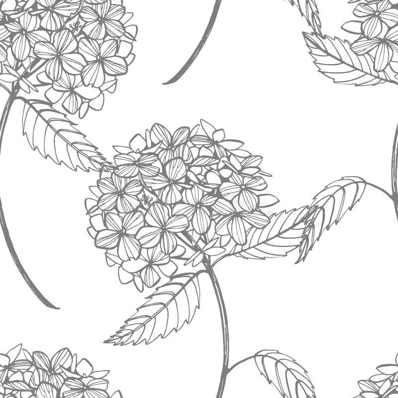 Ejemplo gráfico de la hortensia en estilo del vintage Dibujo y bosquejo de las flores con línea-arte en los fondos blancos stock de ilustración