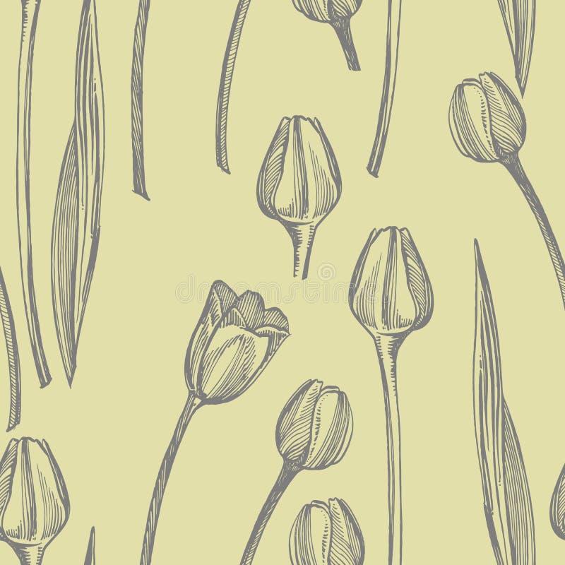 Ejemplo gráfico del bosquejo de la flor del tulipán Ejemplo bot?nico de la planta Sistema medicinal del bosquejo de las hierbas d libre illustration